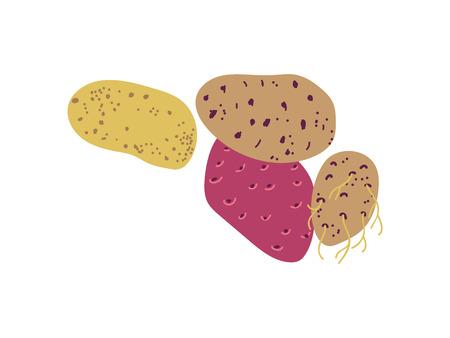 Different Potato Varieties Fresh Vegetable, Nutritious Vegetarian Food Vector Illustration on White Background.
