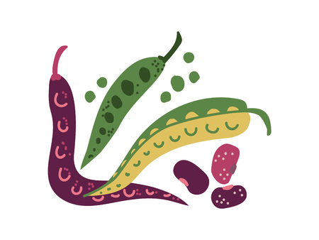 Green Bean Varieties Fresh Vegetable, Organic Nutritious Vegetarian Food for Healthy Diet Vector Illustration on White Background. Banque d'images - 123603638