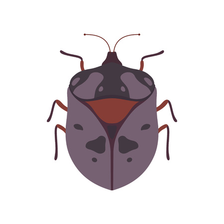 Bug Insect Species Top View Vector Illustration Çizim