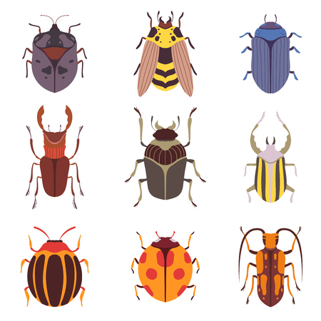Collection of Various Insects Species, Bugs, Wasp, Top View Vector Illustration