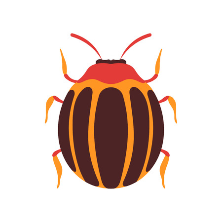 Colorado Insect, Bug Top View Flat Vector Illustration Ilustrace