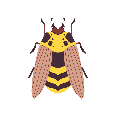 Wasp Flying Insect Top View Vector Illustration