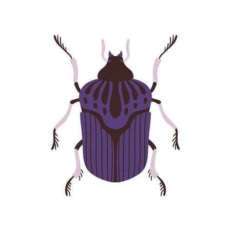 Insect, Blue and Black Bug Top View Flat Vector Illustration