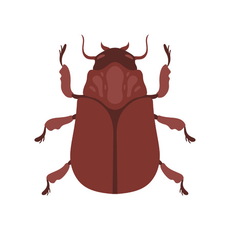 Insect, Brown Bug Top View Vector Illustration