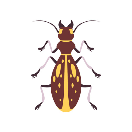 Insect, Yellow and Brown Bug Top View Flat Vector Illustration
