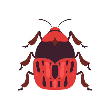 Red Bug Soldier Insect, Top View Vector Illustration