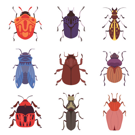 Collection of Bugs, Various Insects Species Top View Vector Illustration