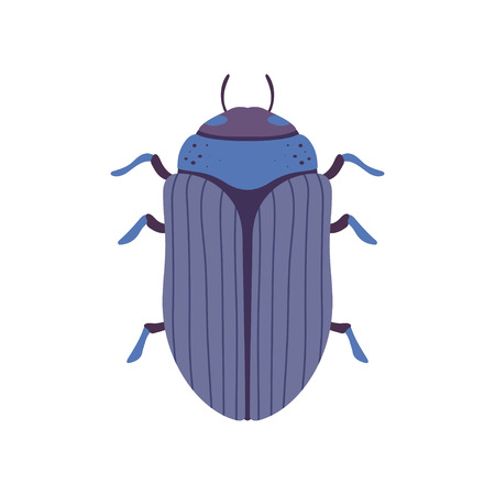Scarab Insect, Bug Top View Vector Illustration