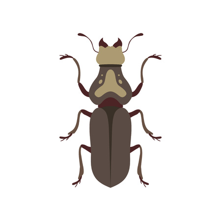 Insect, Bug Insect Species Top View Flat Vector Illustration