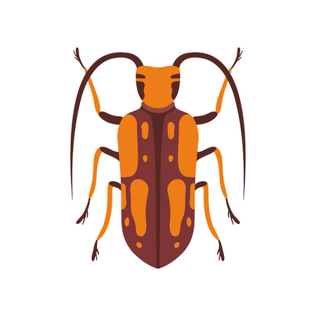 Insect, Orange and Brown Bug Top View Flat Vector Illustration