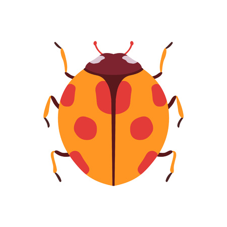 Ladybug Insect, Bug Top View Flat Vector Illustration