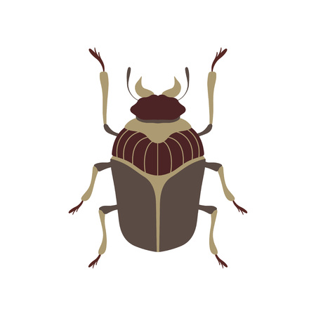 Bug Insect Species Top View Flat Vector Illustration