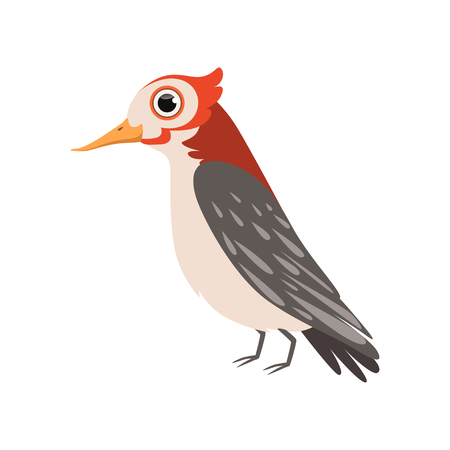 Beautiful cardinal bird vector Illustration isolated on a white background. Иллюстрация