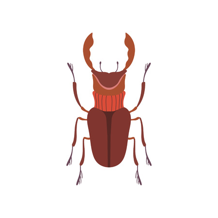 Deer Insect Species Top View Vector Illustration