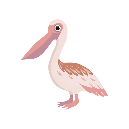 Beautiful pelican bird vector Illustration isolated on a white background.