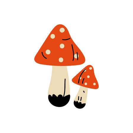Amanita Muscaria Poisonous Mushrooms, Summer Forest Design Element Vector Illustration on White Background.
