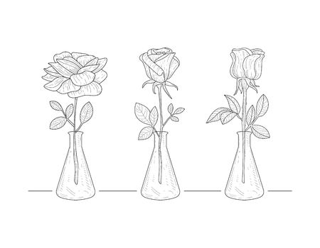 Blooming Rose Flowers in Glass Vase Hand Drawn Vector Illustration on White Background.