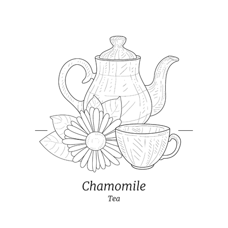 Healing Chamomile Tea Banner or Card Template, Pot and Cup of Herbal Tea hand Drawn Vector Illustration on White Background.