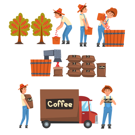 Coffee Industry Production Stages Set, Farmers Gathering, Sorting, Packaging and Transporting Coffee Beans Vector Illustration on White Background. Ilustração