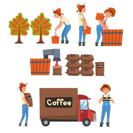 Set di fasi di produzione dell'industria del caffè, raccolta degli agricoltori, smistamento, confezionamento e trasporto di chicchi di caffè illustrazione vettoriale su sfondo bianco. Vettoriali