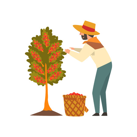 Male Farmer in Straw Hat Picking Red Coffee Beans on Tree, Coffee Industry Production Stage Vector Illustration on White Background.