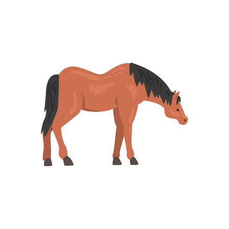 Brown Horse Animal, Side View Vector Illustration