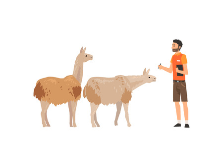 Zoo Worker or Veterinarian Examining Alpacas, Professional Zookeeper Character Caring of Animals Vector Illustration on White Background.