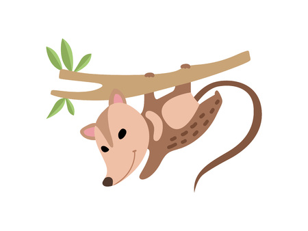 Cute Opossum Hanging on Tree Branch, Adorable Wild Animal Vector Illustration on White Background.