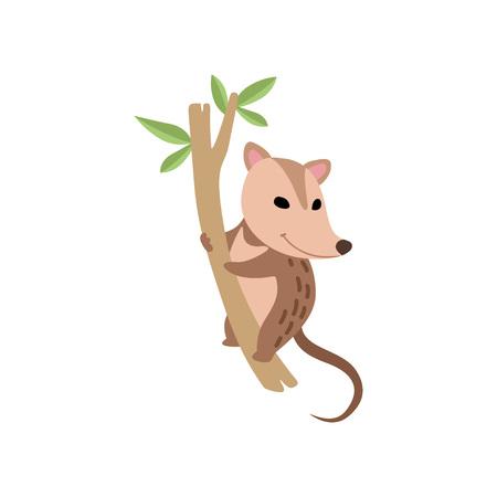 Cute Opossum Wild Animal on Tree Branch Vector Illustration on White Background.