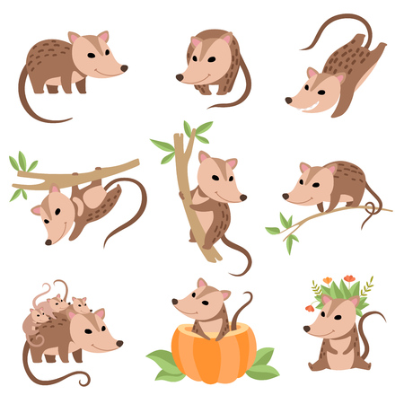 Cute Opossums Animals in Various Poses Set, Adorable Wild Animals Cartoon Characters Vector Illustration on White Background. Çizim