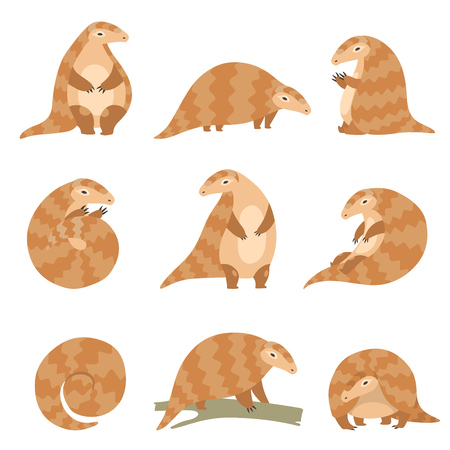 Nettes Pangolin-Tier in verschiedenen Posen-Set, seltene Tierarten Cartoon-Vektor-Illustration auf weißem Hintergrund. Vektorgrafik