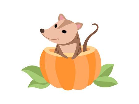 Cute Opossum Sitting in Pumpkin, Adorable Wild Animal Vector Illustration on White Background.
