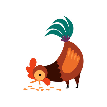 Rooster Pecking Grain in the Yard Vector Illustration on White Background.