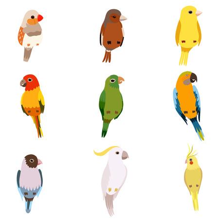 Set di uccellini, Amadin, passero, canarino, pappagallo, cacatua, simpatici animali domestici illustrazione vettoriale su sfondo bianco.