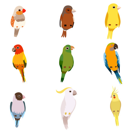 Little Birds Set, Amadin, Sparrow, Canary, Parrot, Cockatoo, Cute Home Pets Vector Illustration on White Background.