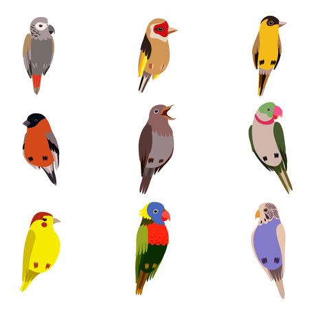 Ensemble de petits oiseaux, Amadin, Bouvreuil, Canari, Perroquet, Rossignol, Chardonneret, Perruche ondulée Cute Home Pets Vector Illustration on White Background Vecteurs