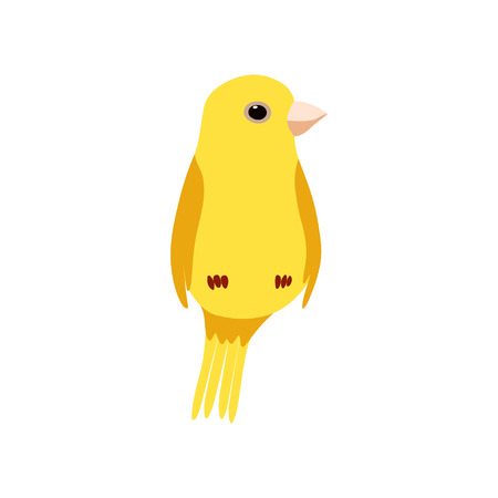 Little Canary Bird, Cute Yellow Budgie Home Pet Vector Illustration on White Background.