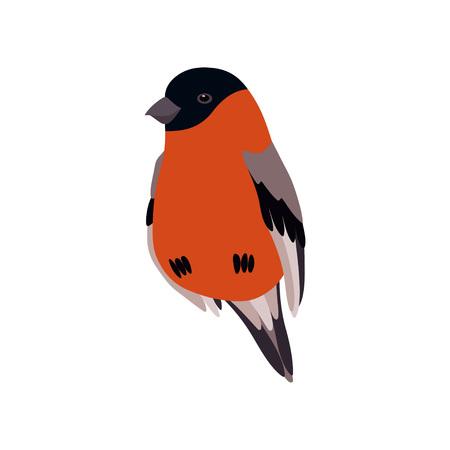 Little Bullfinch Bird, Cute Birdie Home Pet Vector Illustration on White Background.