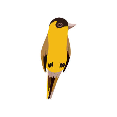 Little Bird, Cute Orange Budgie Home Pet Vector Illustration on White Background.