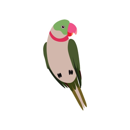 Parrot Bird, Cute Birdie Home Pet Vector Illustration on White Background.