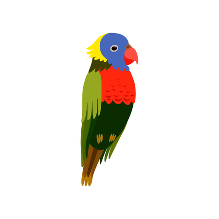 Little Colorful Bird, Cute Parrot Budgie Home Pet Vector Illustration on White Background.