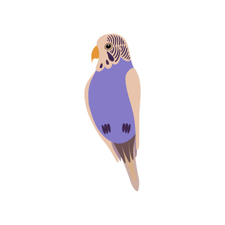 Little Budgerigar Parrot Bird, Cute Birdie Home Pet Vector Illustration on White Background.