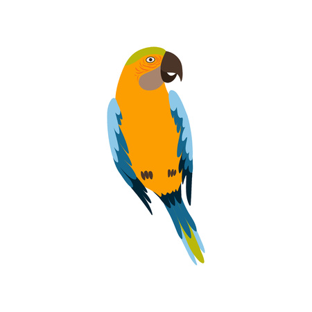 Parrot Bird, Cute Colorful Budgie Home Pet Vector Illustration on White Background.