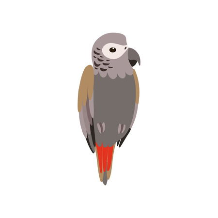 African Grey Parrot Bird, Cute Birdie Home Pet Vector Illustration on White Background.