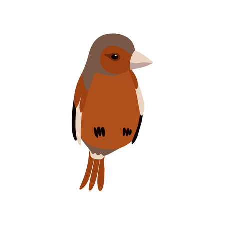 Little Sparrow Bird, Cute Birdie Home Pet Vector Illustration on White Background.