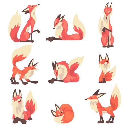 Collection of Red Foxes Characters Cartoon Vector Illustration on White Background. 向量圖像