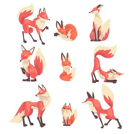 Collection of Cute Red Foxes Characters Cartoon Vector Illustration on White Background.