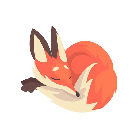 Cute Sleeping Red Fox Character Cartoon Vector Illustration on White Background.