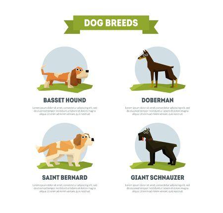 Dog Breeds Banner Template, Basset Hound, Doberman, Saint Bernard, Giant Schnauzer Vector Illustration Stock Vector - 125187050