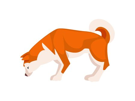 Shiba Inu Dog, Cute Sniffing Pet Animal, Side View Vector Illustration